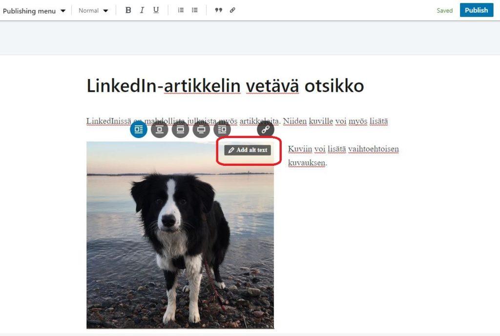 Ruutukaappaus LinkedInin artikkelin julkaisunäkymästä.